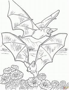 free printable bat coloring pages for
