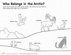 arctic animals worksheets for preschool 14127 who belongs in the arctic worksheet education