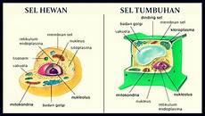 Gambar Struktur Sel Hewan Dan Tumbuhan Beserta Fungsinya