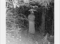 12 photos terrifiantes de la forêt la nuit
