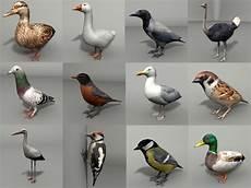 how to make a 3d bird model birds 12 3d model