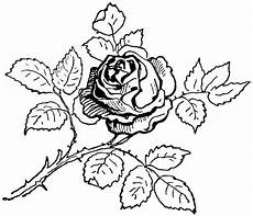 knumathise realistic rose drawing outline images