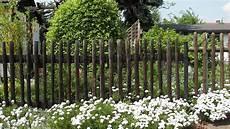 Hecke Oder Zaun Und Welche Alternativen