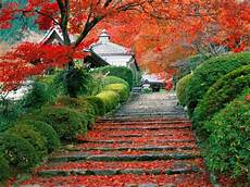 Desain Taman Rumah Ala Jepang Koleksi Desain Rumah
