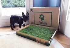 tappeto per cani le migliori lettiere per cani classifica e recensioni di