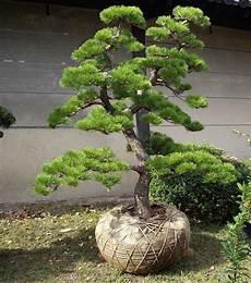 Arbuste Pour Jardin Japonais L Univers Du Jardin