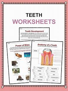 animal teeth worksheets 14367 teeth facts worksheets information for