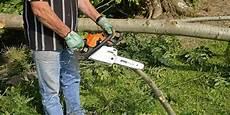 couper un arbre 12261 comment abattre un arbre dans jardin jardin