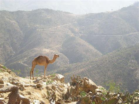 Filfil Solomona Eritrea
