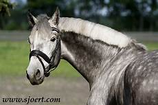 cavallo pomellato scuderia mistery ranch