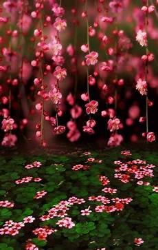 sfondo a fiori scenery vinyl cloth pink floral green leaves