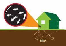 Ameisen Ganz Einfach Loswerden So Geht S Ameisen Im Haus