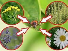 Pflanzen Gegen Zecken Garten Pflanzen Gartentipps Und