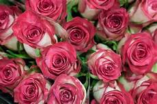 double date roses at new covent garden flower market august 2015 flowers pink roses rose