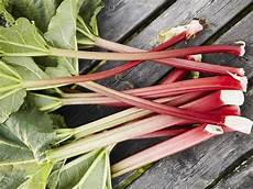What Is Rhubarb And What Can You Do With It