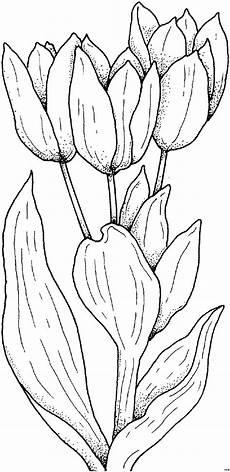 Ausmalbilder Blumen Tulpen Einfache Schoene Tulpen Ausmalbild Malvorlage Blumen