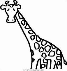 malvorlage giraffe einfach giraffen 05 gratis malvorlage in giraffen tiere ausmalen