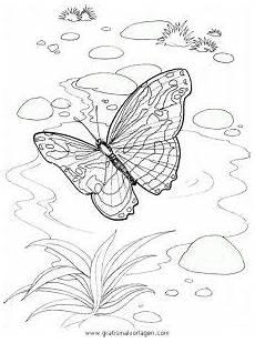 Ausmalbild Schmetterling Pfauenauge Malvorlage Schmetterling Pfuenauge Coloring And Malvorlagan