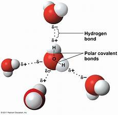 hydrogen bond diagram assalamualaikum