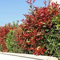 arbuste feuillage persistant kit de haie persistante pour 10 m plantes et jardins