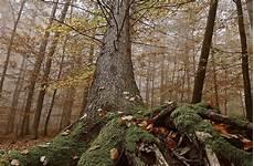 deutschland hessen verwunschener urwald reise