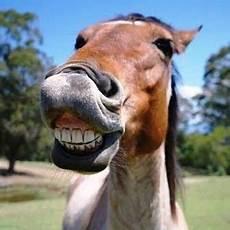 10 Gambar Meme Lucu Lebaran Kuda Gambar Top 10