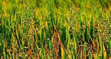 Unkraut Im Garten Bestimmen Bilder Arten In Rasen