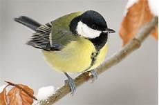einheimische vögel im winter stunde der winterv 246 gel 2017