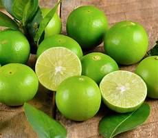 citron vert le citron vert un d 233 o naturel top sant 233
