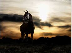 Pictures Blog: Black Arabian Horses Wallpaper