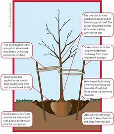 11 tree planting guide