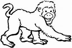 Malvorlagen Tiere Affen Free Zoo Animals Coloring Pages