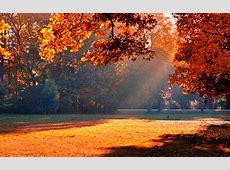 sunshine autumn trees   HD Desktop Wallpapers   4k HD