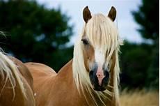 Schöne Pferde Bilder - 13 beautiful breeds you didn t existed before today