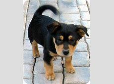 Baby Barley   Adopted Puppy   120122   Oakley, CA