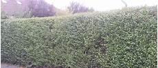Grenzabstand Bei Heckenpflanzen Hecken Als Sichtschutz