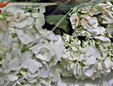 diy fresh flower preservative hometalk