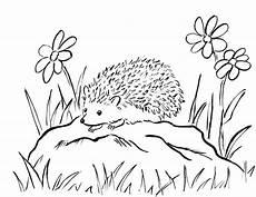 hedgehog coloring pages for children 100 images print