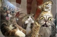 Lustige Ausmalbilder Katzen Lustige Katzenvideos Und Bilder Weltkatzentag 2013 Die