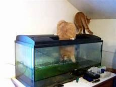kater aquarium putzen