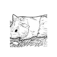 malvorlage tiermandala meerschweinchen tiere mandalas