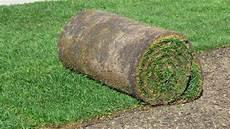 gazon naturel en rouleau prix livraison pelouse