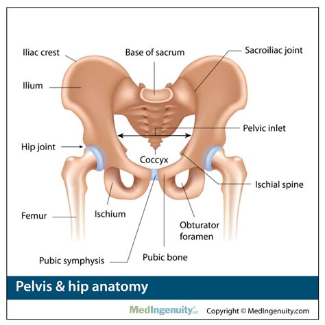 Hip Joint Location