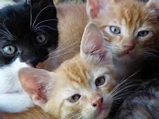 katzenbabys zu verschenken katzen zu verschenken