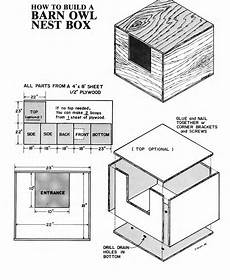 barn owl house plans great horned owl bird house plans