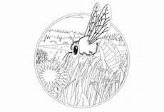 Biene Malvorlagen Jogja Ausmalbild Biene Olis Bahnwelt