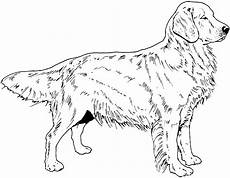 Ausmalbilder Hunde Golden Retriever Breed Coloring Pages Find Beautiful Coloring Pages At