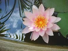 fior di lotto shoo e balsamo alla mandorla dolce e fiori di loto