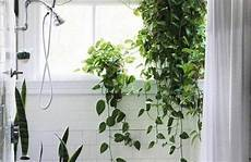 Welche Zimmerpflanzen Brauchen Wenig Licht - welche zimmerpflanzen brauchen wenig licht растения