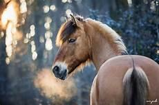 Ausmalbilder Pferde Im Winter 5 Gr 252 Nde F 252 R Ein Fotoshooting Im Winter 187 Panke